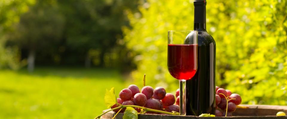Spanish Wine - MX2 GLOBAL