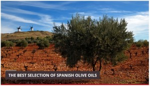 best selection of olive oil