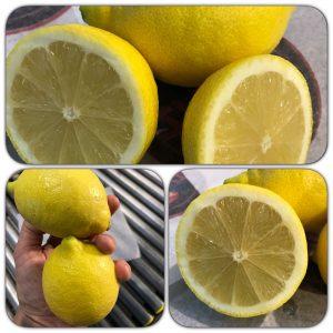lemons-2016-1